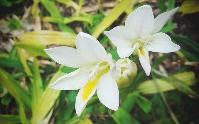 La importancia de una Flor