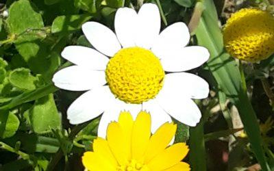 Caléndulas y Manzanillas abren la primavera del Laboratorio BitrixBeauty