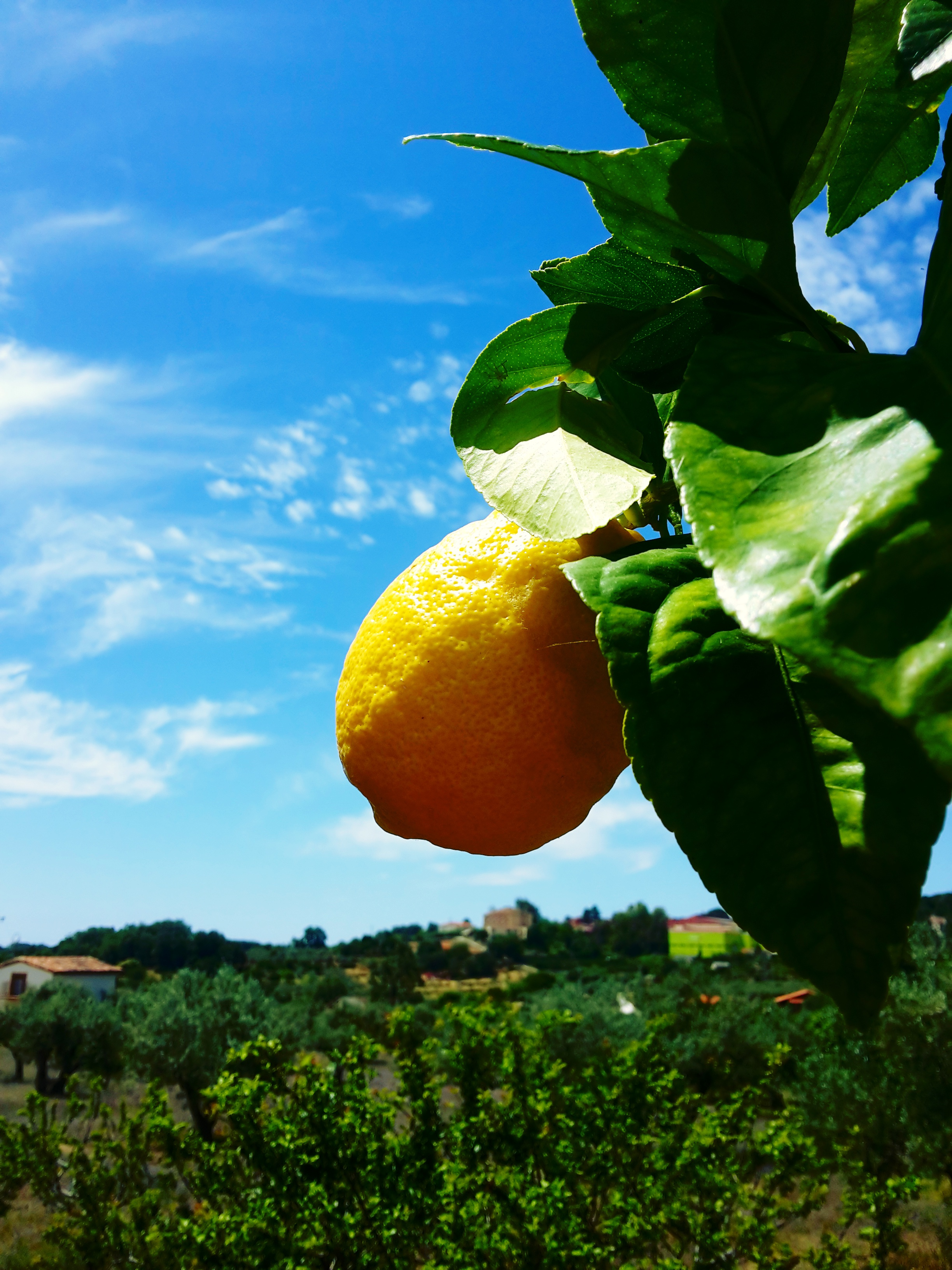 Aceites Fotosensibles. Limón